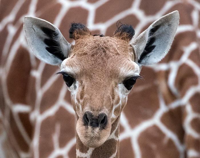 21 интересная фотография животных