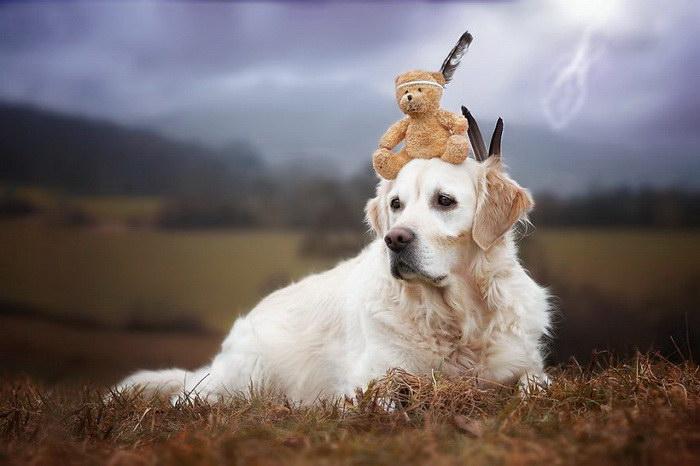 Золотистый ретривер Мистер Малли и его лучший друг