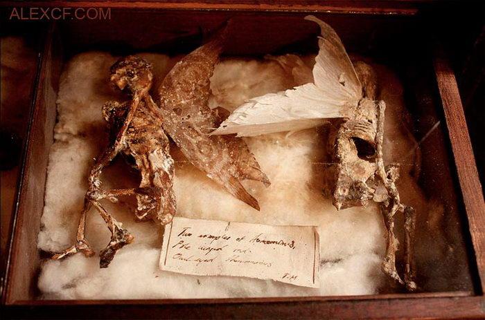 Жуткая коллекция скелетов Thomas Theodore Merlin