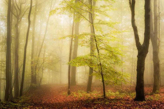 Задумчивая природа в фотографиях Heiko Gerlicher