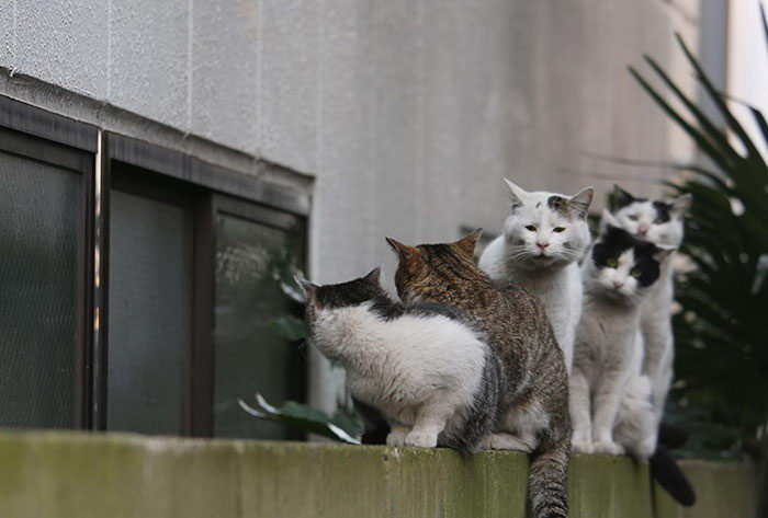 Токийские кошки в фотографиях Masayuki Oki