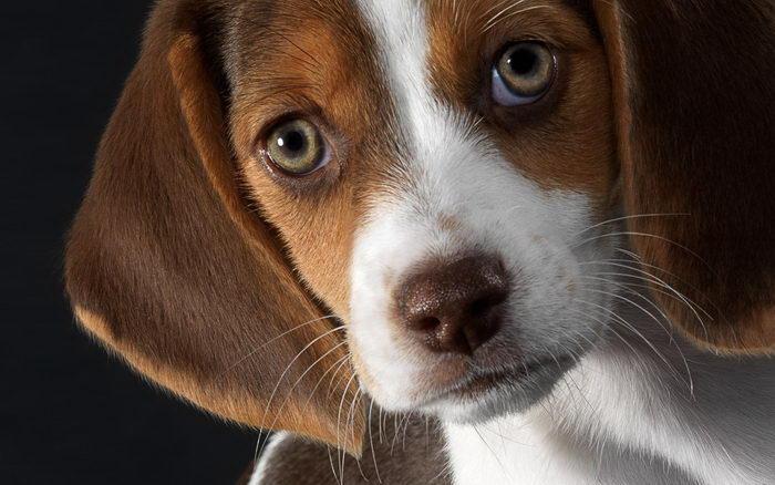 Монж для собак
