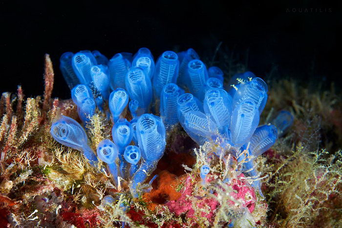 Новые фотографии морских чудищ Александра Семенова