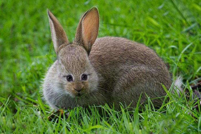 Если бы глаза некоторых животных располагались по центру лица