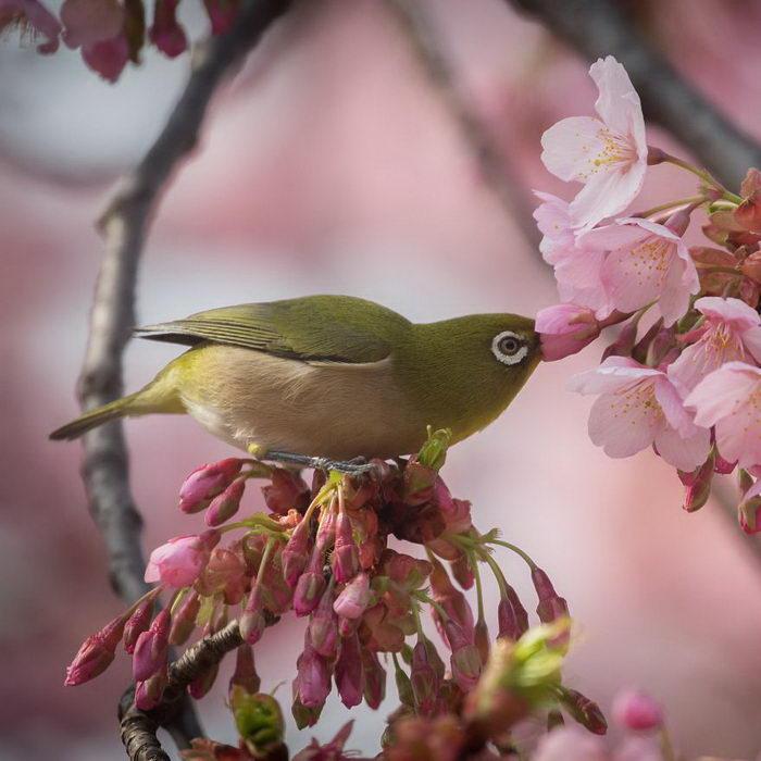 Природа Японии в фотографиях Kunito Imai