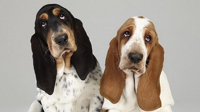 Отношения между щенками в фотографиях Shaina Fishman