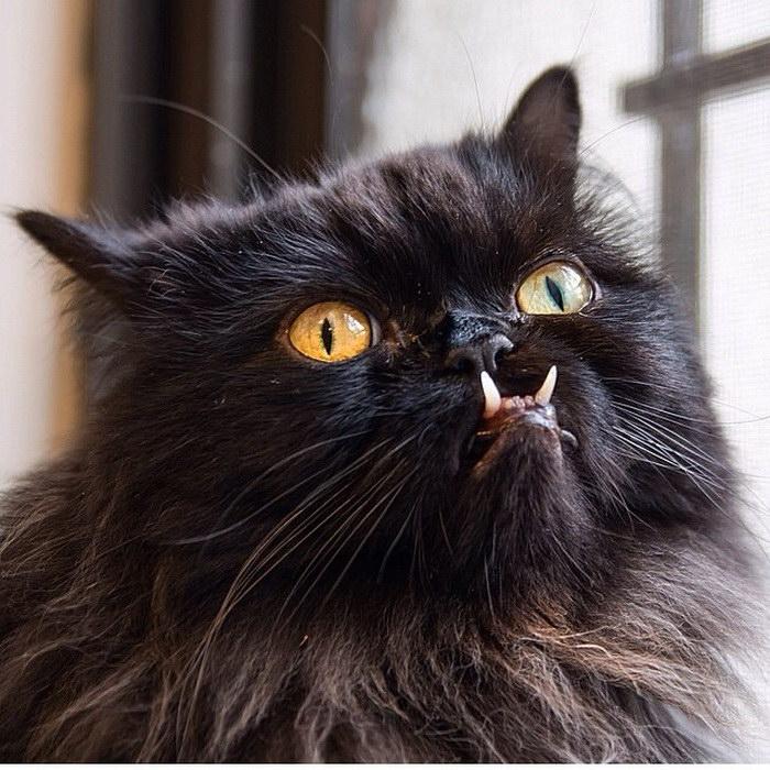 Удивительная кошка, которую зовут Монстр-трак