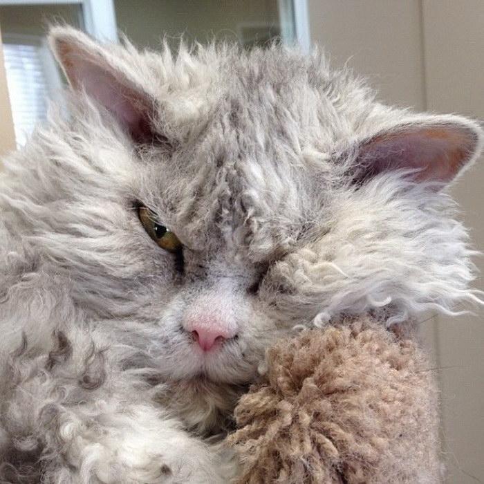 Осуждающий всех вокруг кот Альберт