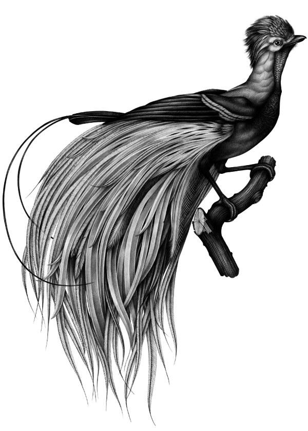 Иллюстрации Violaine & Jeremy