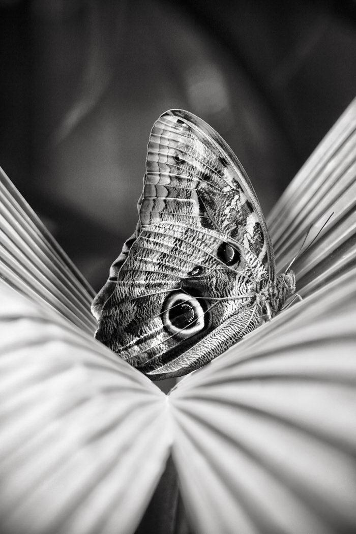 Черно-белые фотографии Enrique Pelaez
