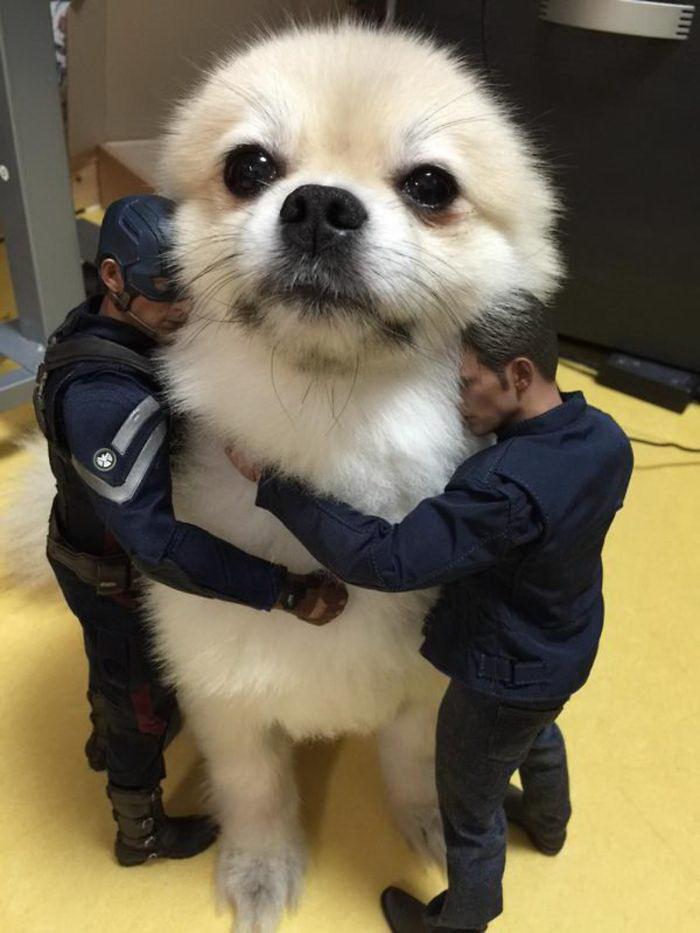 Фотографии, на которых собаки выглядят настоящими гигантами