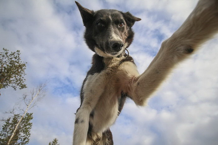 Собаки-любители селфи