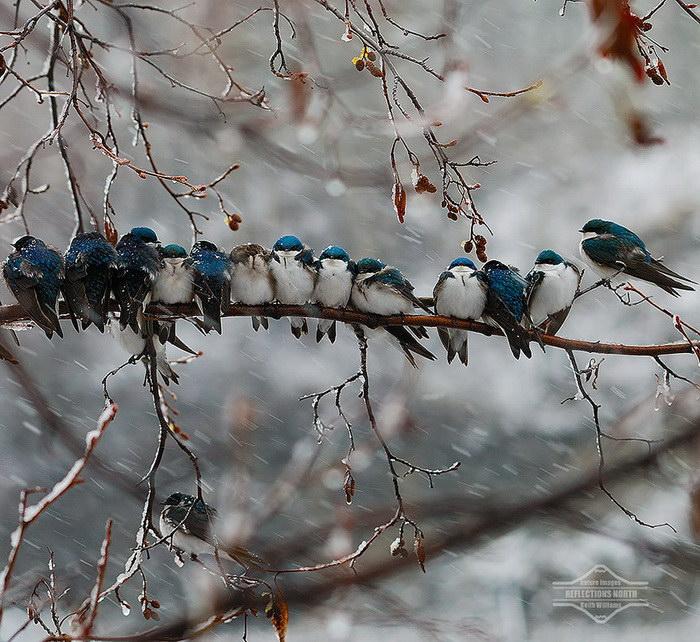 20 фотографий птичек, прижавшихся друг к другу для тепла
