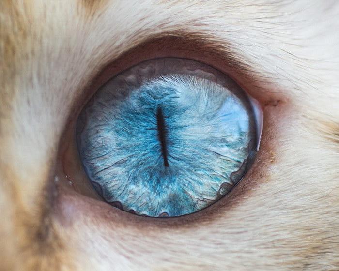 Глаза кошек в фотографиях Andrew Marttila