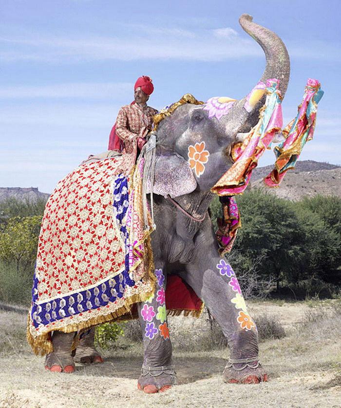 Индийский фестиваль слонов в фотографиях
