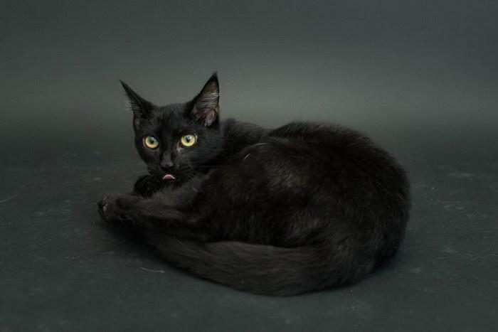 Черные кошки из приюта Лос-Анджелеса