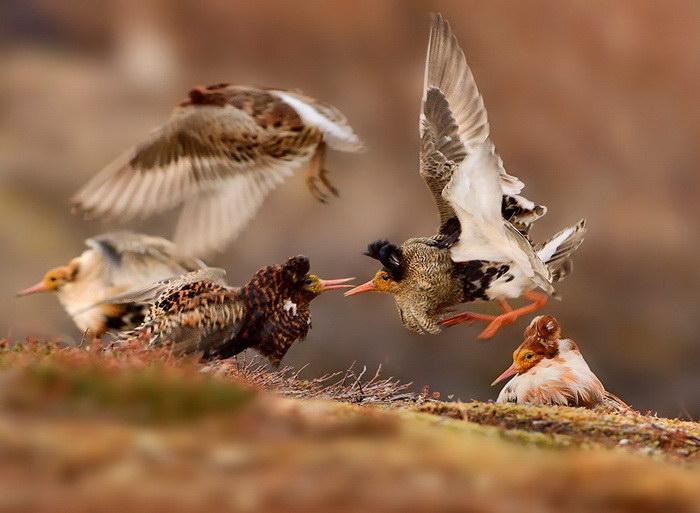 Победители конкурса Wildlife Photographer 2015