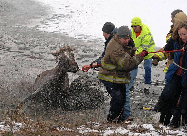 Спасение лошади которая провалилась