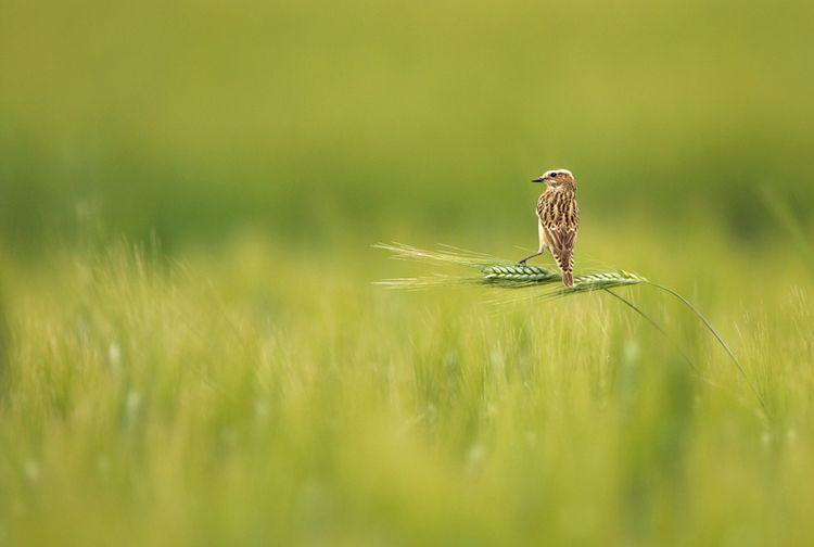 Конкурс Золотая черепаха