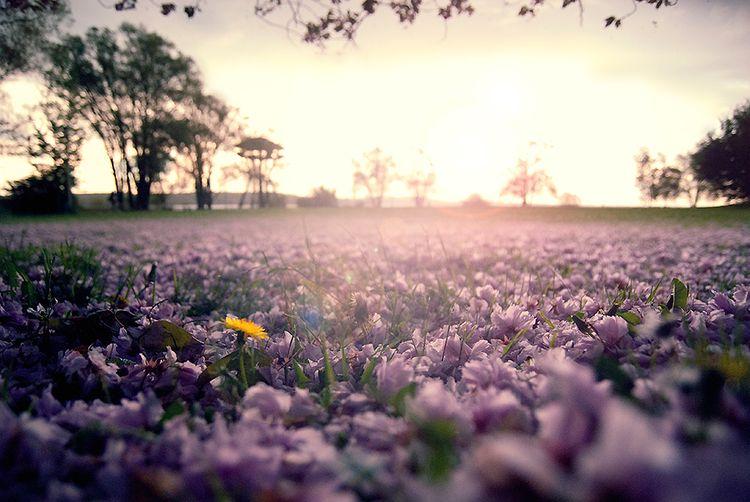 Бывает, что-то не клеится, плохо выходит, и в то же время чувствуешь что-то  хорошее.Вспомнишь о хорошем и поймешь  это весна. Так, считал Михаил  Михайлович ... 08ba58e68d2