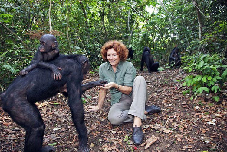 Обыкновенный шимпанзе
