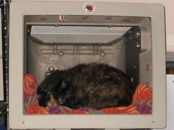 Креативные домики для животных в старых мониторах