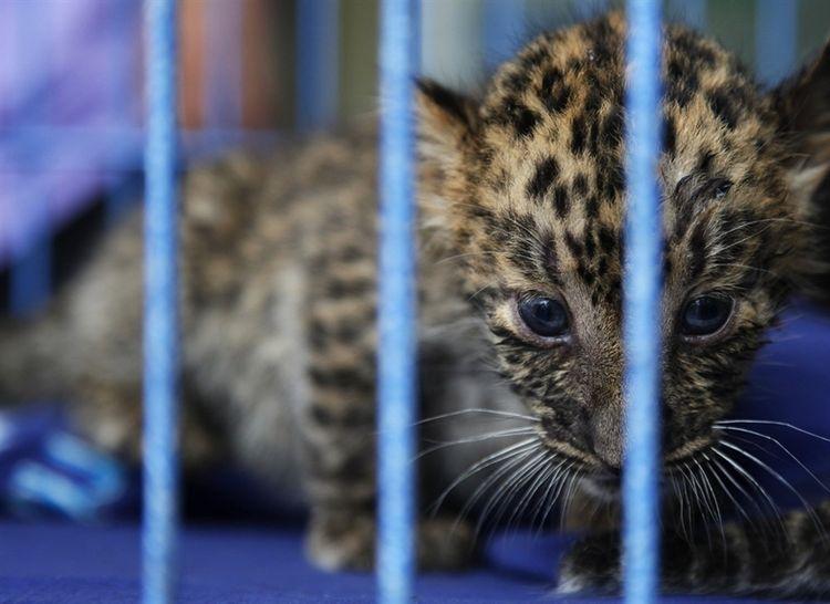 Контрабанда экзотических животных