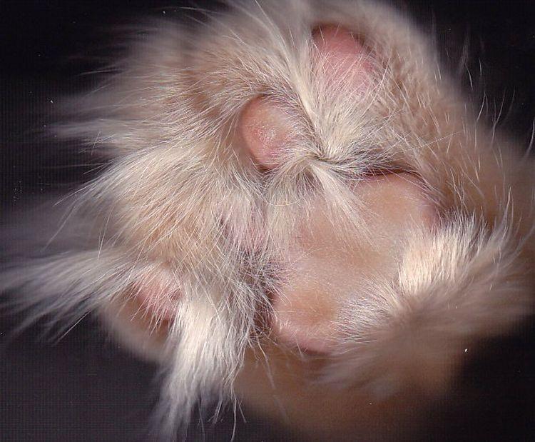 Кошки в сканере