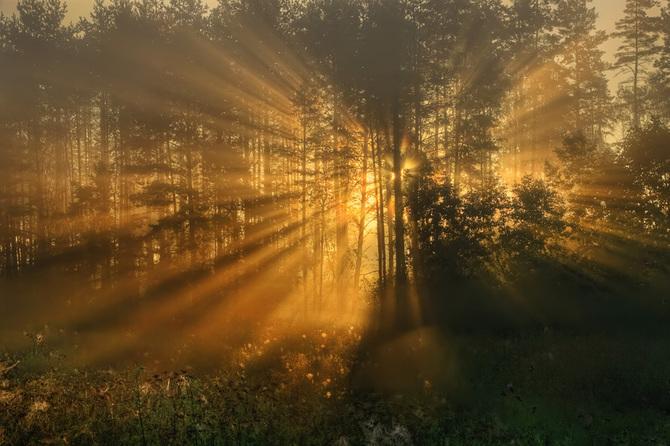 Потрясающие фотографии природы Rimantas Bikulcius