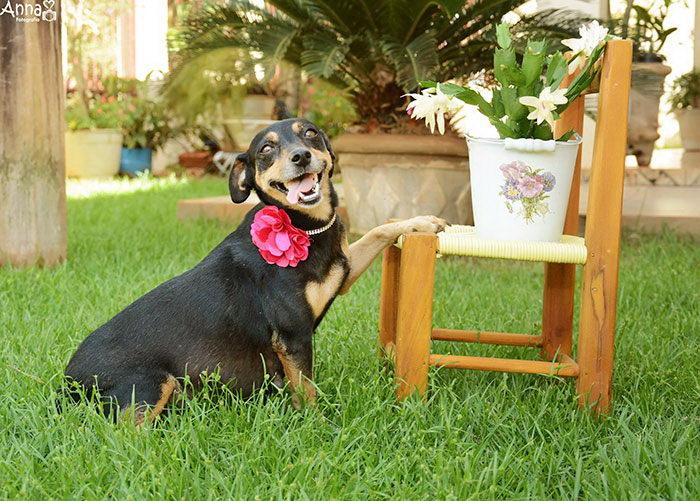 Классная фотосессия беременной собаки