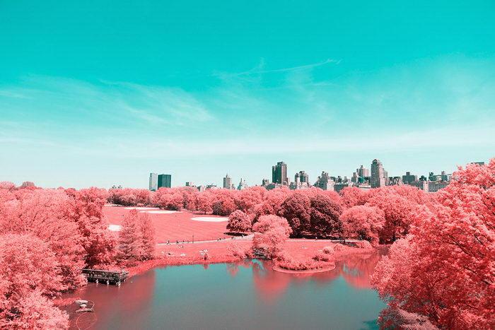 Центральный парк Нью-Йорка в фотографиях Paolo Pettigiani
