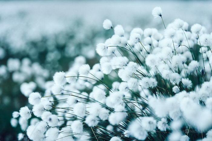 Финское лето в снимках Joni Niemel?