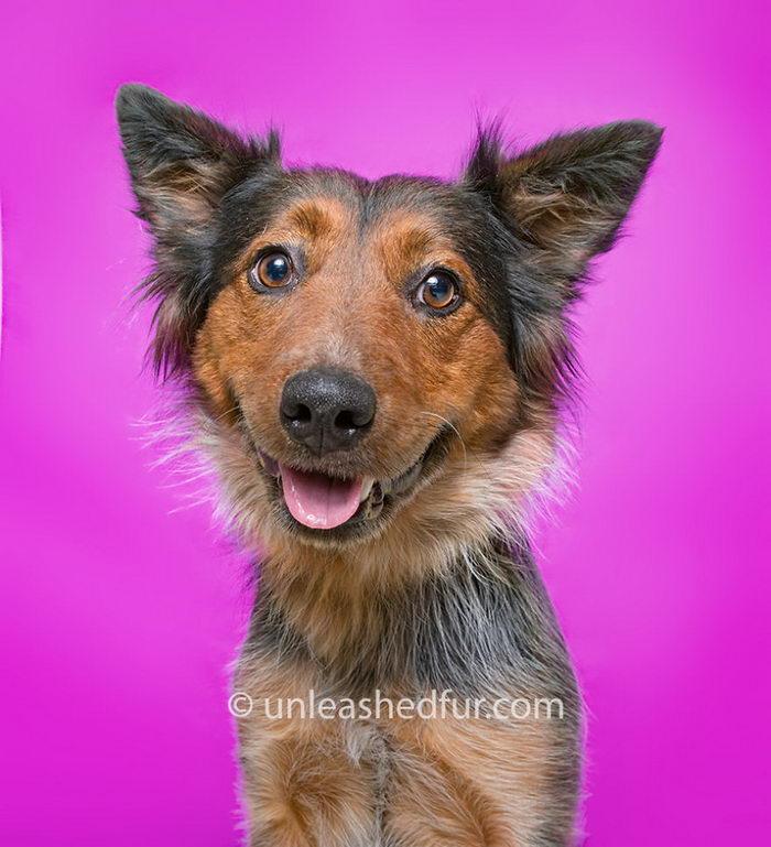 Собаки из приюта в снимках Unleashed Fur