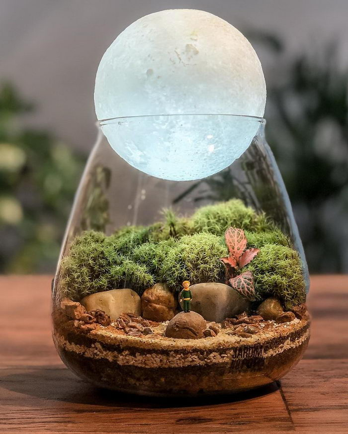 Необычные экосистемы в банках Lina Cirilo и Laura Goncales