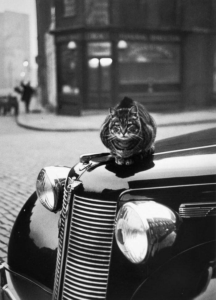 Кошки Лондона: фотографии Thurston Hopkins