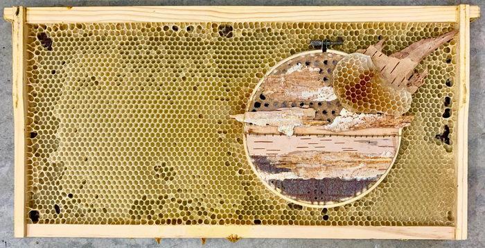 Пчелы и искусство: работы Ava Roth