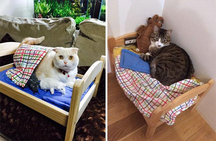 Как сделать кошке кровать