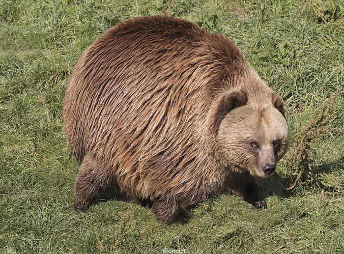 Если бы животные были круглыми