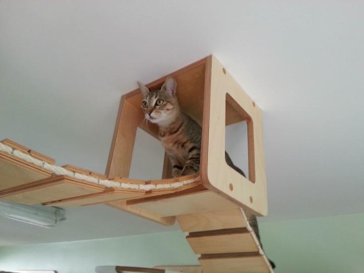 Стенка для кота своими руками - 2800000.net