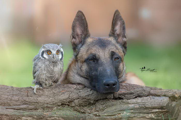 Собака Инго и ее друзья-совушки