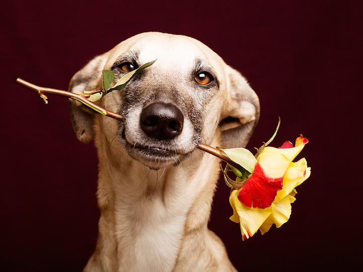 Жизнерадостные собаки в фотографиях Elke Vogelsang