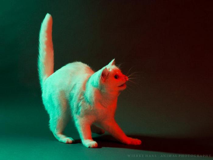 Студийная съемка кошек: фотографии Wiebke Haas
