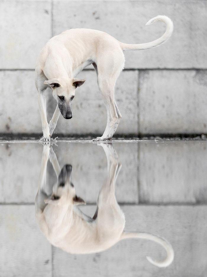 Собачьи эмоции в снимках Elke Vogelsang