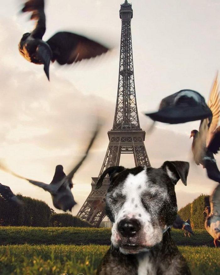 Собаки-путешественницы Melissa Mariner