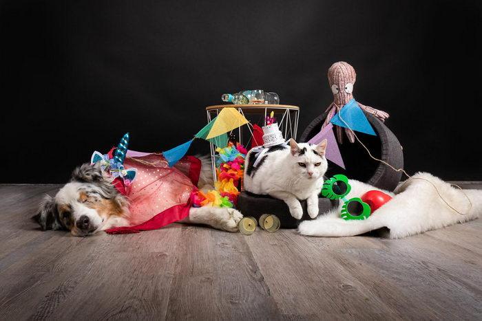 Животные на карантине: проект Juliette Bercovici