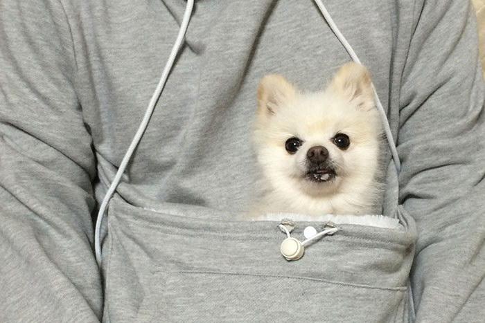 Толстовка с кармашком для кошки или собачки