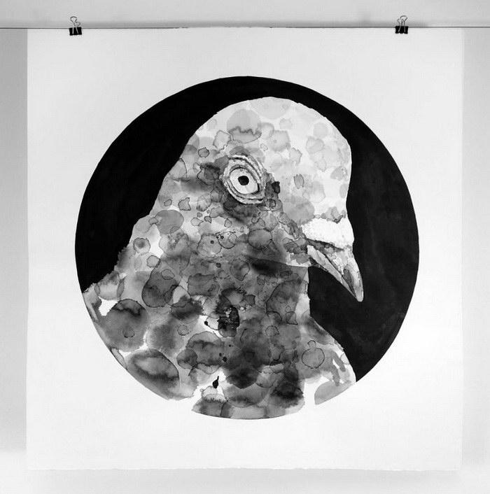 Голуби на рисунках Gawie Joubert