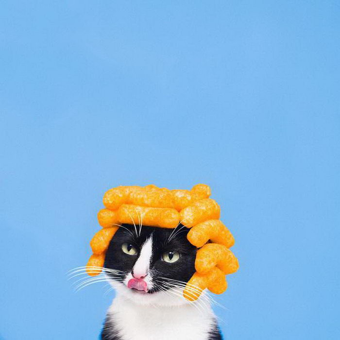 Фотограф Hugo Martinez и его кошка Princess Cheeto
