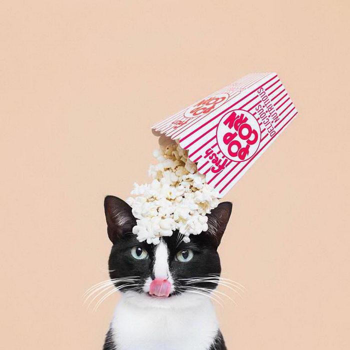Фотограф Hugo Martinez и его кошка Princess Cheeto