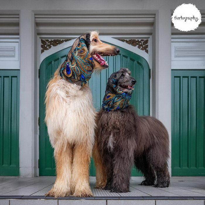 Влюбленные собачки в фотографиях Craig Turner-Bullock